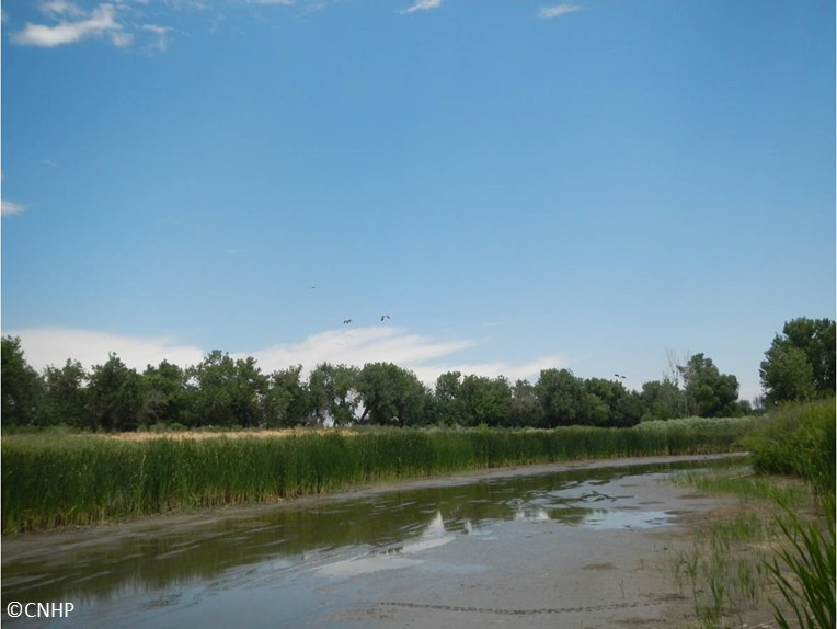 Riverside Cemetery Wetland